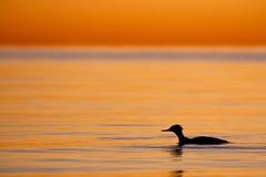 Форма птицы Стоковое Фото