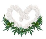 Форма сердца белого цветка ноготк или calendula Стоковое Изображение RF