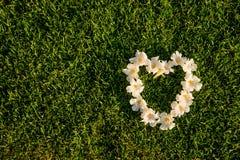 Форма сердца белых цветков на поле зеленых трав Стоковое Фото