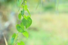 форма сердца зеленых лист на день валентинки Стоковое Изображение RF
