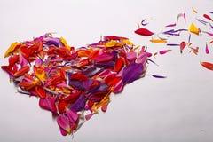Форма сердца от лепестков цветка Стоковое Фото