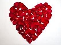 Форма сердца с лепестками розы стоковые изображения