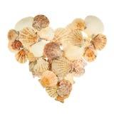 Форма сердца сделанная seashells Стоковая Фотография RF