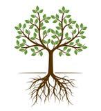 Форма цвета дерева с корнями также вектор иллюстрации притяжки corel Стоковое Фото