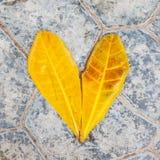 Форма шестка сделанная из листьев Стоковые Фото