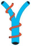 форма 2 лимфатическая Стоковая Фотография RF