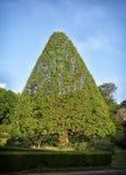 Форменное дерево v Стоковое фото RF