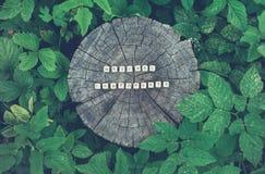 Формулирует естественные компоненты шариков на поверхности пня дерева в лесе Стоковое фото RF