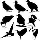 формы птицы 9 Стоковая Фотография RF