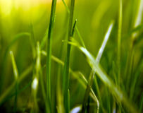 формы травы стоковое фото