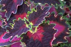 формы цветов Стоковое Фото