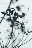 Формы цветорасположения укропа в нерезкости Стоковое Фото