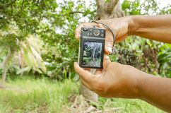 Фотографировать дерево стоковое фото rf