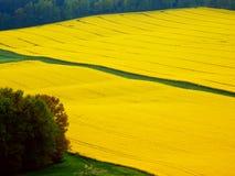 Фотография весны цвета полей рапса Стоковые Фото