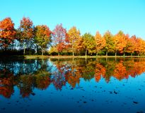 Фотография детали отражения деревьев на воде Стоковые Фото
