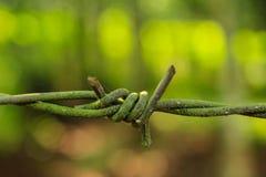 Фотография запаса колючей проволоки Стоковое Изображение