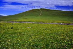 Фотография ландшафта горы лета стоковые изображения