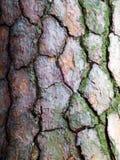 Фотография макроса коры дерева Стоковые Изображения