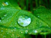 Фотография макроса падения дождя на зеленых лист Стоковое Изображение