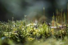 Фотография макроса различных мхов Стоковые Изображения