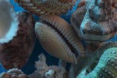 Фотография макроса - раковины с воздушными пузырями, предпосылкой моря Стоковые Фотографии RF