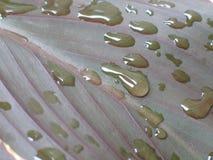 Фотография макроса с водой падает на зеленые лист Стоковые Фото