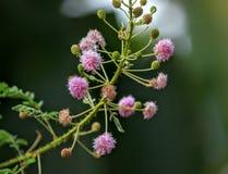 Фотография природы полевого цветка стоковое изображение rf