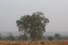 Фотография природ Стоковые Изображения RF