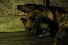 Фотография собаки стоковое изображение