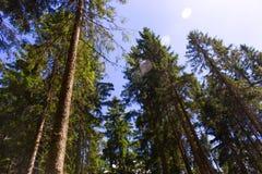 Фотография солнца в деревьях Стоковые Изображения