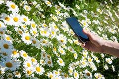 Фотография телефона цветка стоковая фотография rf