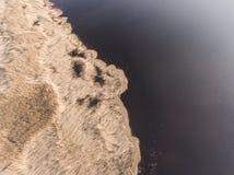 Фотография трутня - тростники в солнечном свете захода солнца на побережье озера стоковая фотография rf