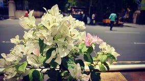 Фотография цветка белой бумаги стоковое фото rf