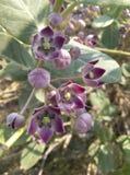Фотография цветка Стоковые Фото
