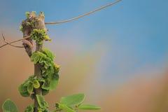 Фотография/цветки природы Стоковое Изображение RF