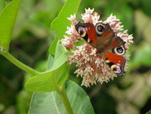 Фотография цветков и бабочки красоты Стоковая Фотография RF
