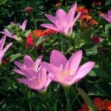Фотография цветков стоковые изображения rf