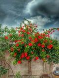 Фотография цветков Стоковое Изображение RF