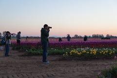 Фотографы тюльпана восхода солнца Стоковое Изображение