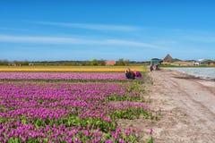 Фотографы фотографируют красивые поля цветка в th Стоковая Фотография
