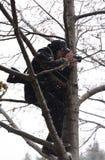 Фотограф в дереве Стоковые Фотографии RF
