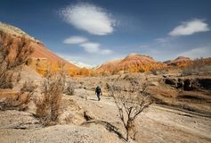 Фотограф в пустыне стоковое изображение rf