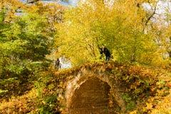 Фотограф в старом парке осени Стоковое Изображение RF
