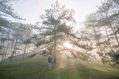 Фотограф в туманном, восход солнца в лесе, лучи и beautyful света Стоковые Изображения RF