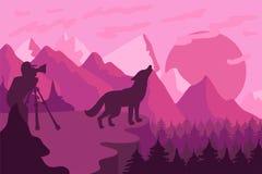 Фотограф фотографирует одичалого волка в природе иллюстрация штока