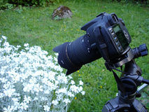 фотограф хобби действия Стоковые Изображения
