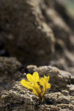 фотосинтез водорослей Стоковое Изображение