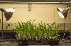Фотосинтез в действии Стоковые Изображения