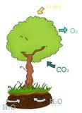 фотосинтез Стоковое Изображение