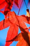 фотосинтез Стоковые Изображения